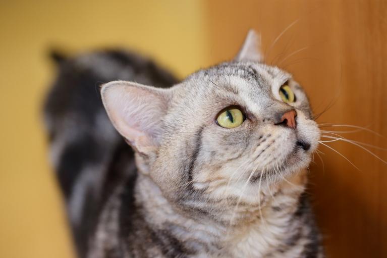 ネコちゃんの健康診断